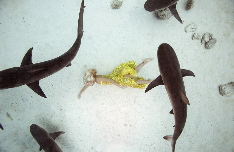 29A8C57600000578-3126370-Feeding_time_In_this_stunning_shot_a_school_of_four_lemon_sharks-a-16_1434463373591