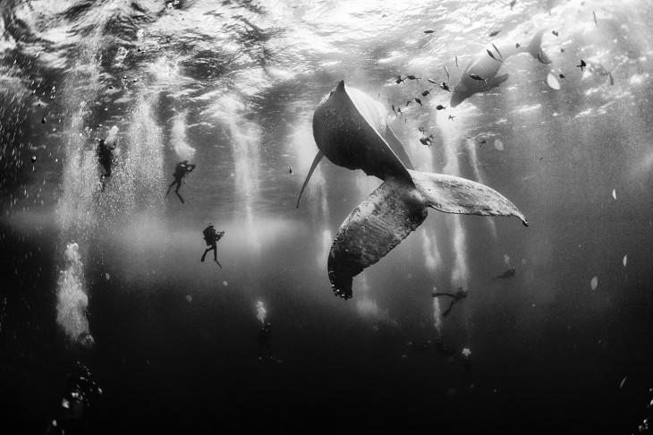 Fotografías-ganadoras-de-National-Geographic-2015-2-730x486
